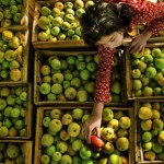 میوه ممنوعه...