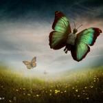 پروانه ها...