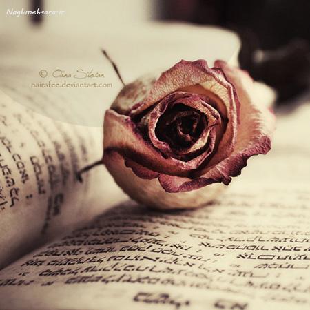 توی دنیا  دوتا نا بینا میشناسم  یکی تو که هیچ وقت عشقم رو ندیدی  یکی من که کسی جز تو ندیدم