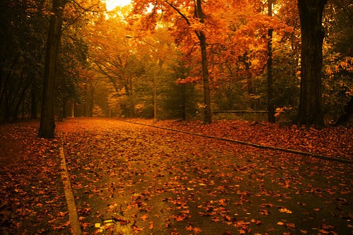 Photo-Skin_ir-Autumn39